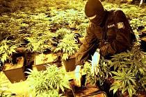 Ve čtvrtek 18. února večer odhalili policisté nelegální pěstírnu konopí v části Jablonce nad Nisou – Kokoníně.