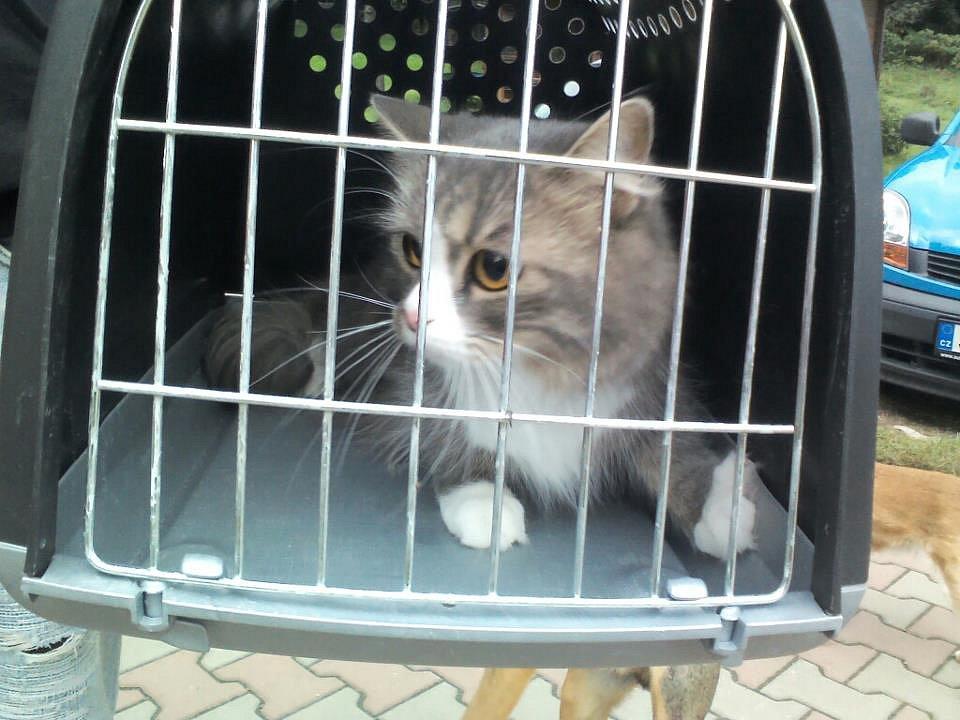 dívky dívky kočička