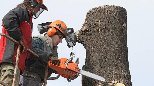Kácení stromů. Ilustrační snímek.