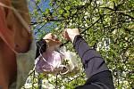 Gabriela Kuková se svojí dcerou Klárou zavěšuje roušky na nový rouškovník na sídlišti Mšeno v Jablonci nad Nisou.