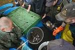 Rybáři vylovili ryby z Novoveského koupaliště v Jablonci nad Nisou.