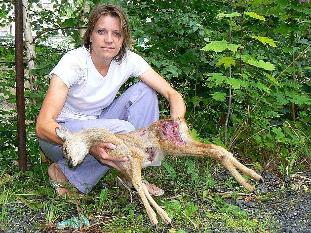 Zraněný srnec v lese pod vodárnou u Lukášova, kterému byly podle odhadu dva měsíce, neměl šanci. Dagmar Kubištová z jablonecké Ligy na ochranu zvířat viní nezodpovědné majitele psů.