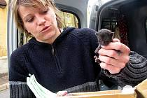 Dagmar Kubištová s nalezeným kotětem.