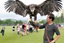 Nad hřištěm u základní školy v Mozartově ulici se v jednu chvíli vznášela mladá orlice. Rozpětí jejich křídel v dospělosti bývá často i přes dva metry a váží kolem 8 kg.