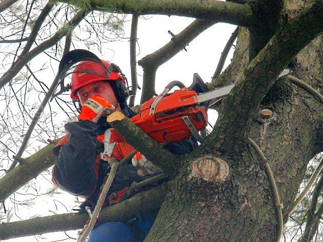Dominanta bezprostředního okolí kostela sv. Anny zmizela. Dvě vzrostlé borovice, které dokreslovaly kolorit místa, skončí v kamnech. Zima roku 2007 je velmi poznamenala, hrozilo nebezpečí pádu silných větví a odumírání stromů.