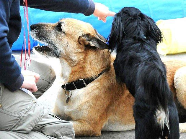 V jablonecký Tyršových sadech se v sobotu konal 12. ročník soutěže O Jabloneckého voříška 2010. Představilo se 30 psů bez průkazu původu. Titul nejvyšší získal čtyř a půl měsíční Fany Evy Ouhrabkové.