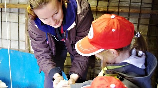Jana Zvárová, majitelka lučanské farmy Na Slunci, ukazovala dětem mláďátka a vyprávěla, jak se k nim musí chovat.