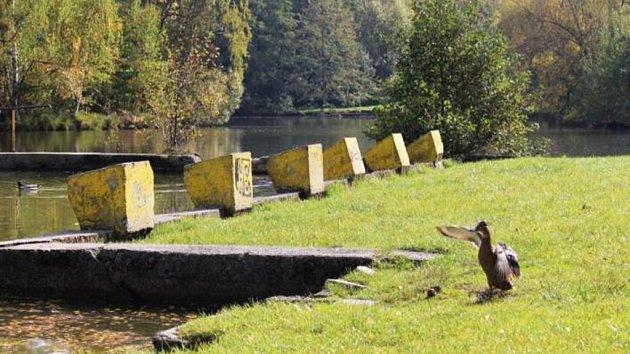 Novoveské koupaliště dnes - ráj pro divoké kachny.