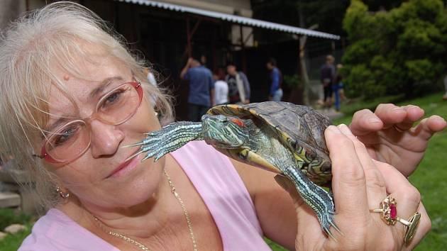 Dagmar Holanová ukazuje nový přírůstek želvu nádhernou, která mimo vody miluje  souš a vyhřívání se na slunci.