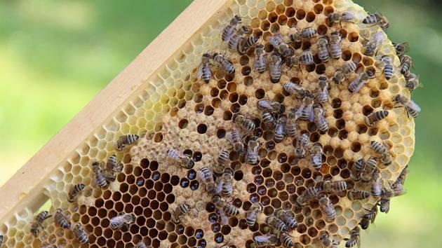 Včely. Ilustrační snímek