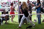 Národní výstava psů 16. a 17. července. V Mladé Boleslavi soutěžili psi nejrůznější plemen, barev a velikostí. Konala se zde národní výstava psů. O tituly bojovalo zhruba tři tisíce psů.