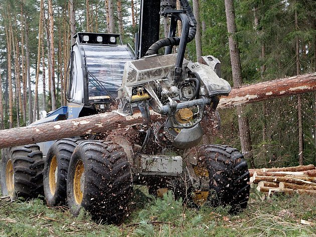 Těžba dřeva. Ilustrační snímek.