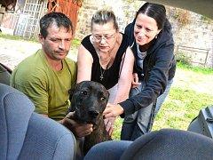 Záchrana mladé fenky staforda s pochroumanou nohou. Našli ji na dvorku.