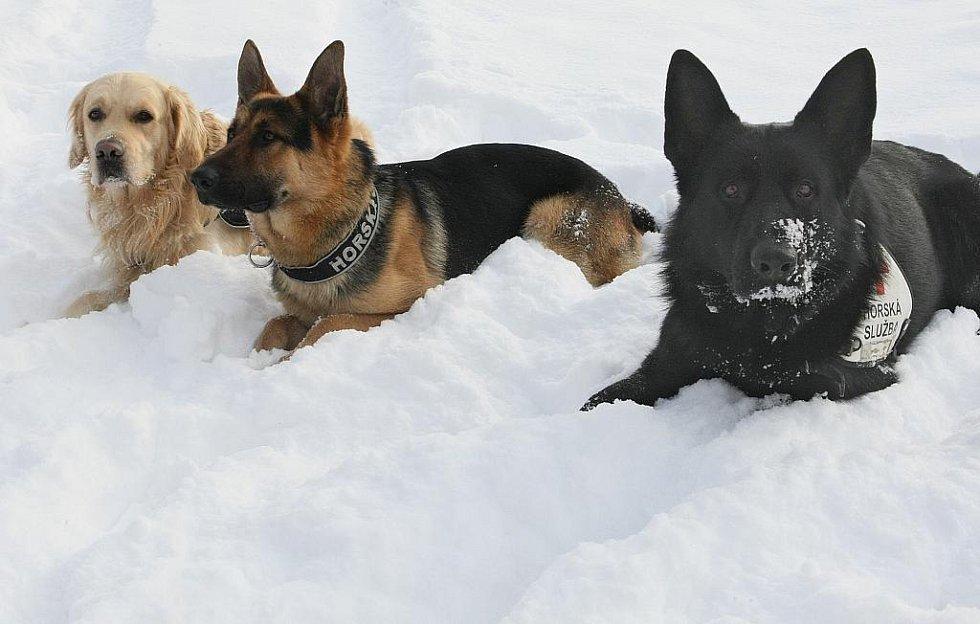 Specialisté na plošné vyhledávání lidí v horském terénu. Psi v týmech Horské služby Jizerské hory. Zleva Charlie, Rocky a Attila.