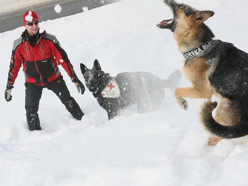Specialisté na plošné vyhledávání lidí v horském terénu. Vedle práce spolu hodně dovádí, zejména v právě napadlém prašanu. Na snímku Aleš Rydval s černým dvouletým Attilou a s Hořejšího jedenapůletým Rockym.