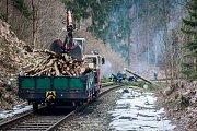 Kácení dřevin podél železniční trati 035 Železný Brod - Tanvald na snímku z 27. března. Cestující musí počítat s výlukami vlaků až do 29. března.
