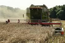 Zemědělství v Libereckém kraji. Na snímku sklizeň řepky.