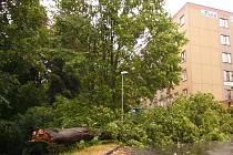 POškozování stromů může vést až k nehodě