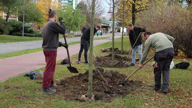 Výsadba stromů na sídlišti, ilustrační foto.