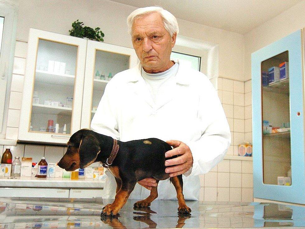 BOJUJE O ŽIVOT. Po majiteli se slehla zem. Veterinář Jaromír Baudyš vyšetřuje malého pejska ve své ordinaci.