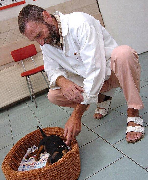 BOJUJE O ŽIVOT. Po majiteli se slehla zem. Veterinář Jaromír Baudyš vyšetřuje malého pejska ve své ordinaci. Na snímku veterinář Miroslav Peršín.