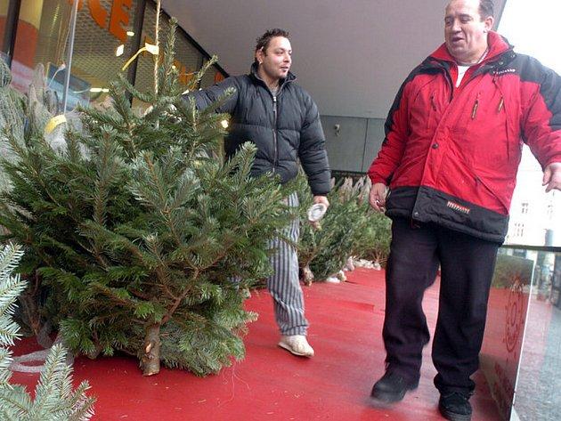 Prodej vánočních stromků. Ilustrační snímek.