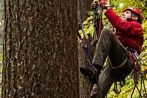 Karel Kejla zdolává první z více než šedesáti metrů směrem vzhůru po kmeni douglasky tisolisté.