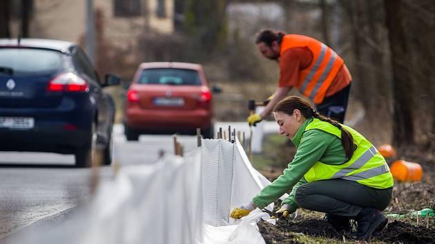Pracovníci záchranné stanice Archa provedli 4. dubna podél silnice mezi Novým Harcovem a Lukášovem instalaci plastových zábran, které chrání migrující žáby.