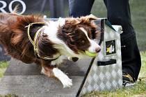 Flyball je sport i zábava pro temperamentní psy všech plemen.