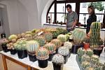 Výstava kaktusů a sukulentů v Krupce.
