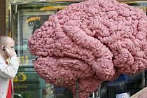 Lidé jsou schopni zapomenout ledacos. Nemají obří mozek.