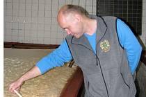 Ředitel pivovaru v Malém Rohozci František Jungmann měří teplotu ve kvasné kádi