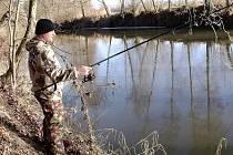 K obstarání potravy si ojediněle letos vybrali kormoráni velcí řeku Jizeru. Jejich příčinou zde uhynulo větší množství ryb včetně těch chráněných.