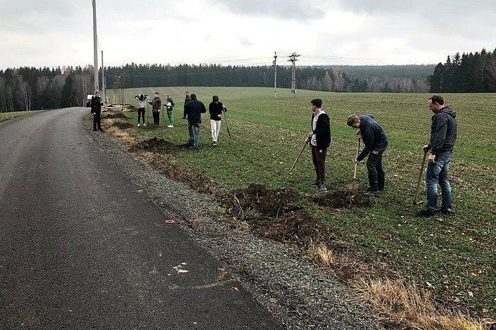 Výsadba stromořadí v ulici Rádelská.
