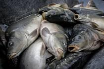 Jak lovili ryby dříve? Ukáže výstava