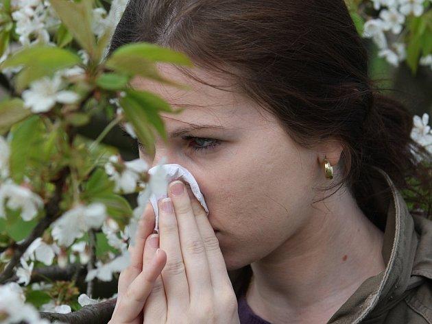 Pylová alergie. Ilustrační snímek.