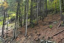 Pozemky jsou u silnice, která vede z Harrachova směrem na Rokytnici nad Jizerou.