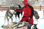 Jana Henychová představuje smečku čtrnácti psů, se kterými jede závod v Norsku.