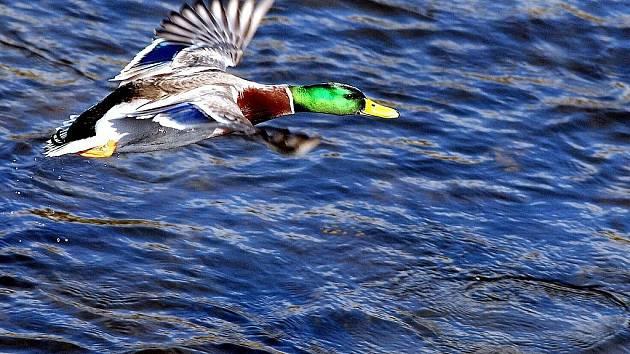 Jablonecká přehrada. Ilustrační snímek.