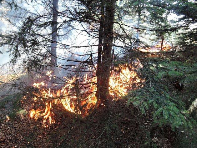 Les hořel v sobotu u Měděnce v Jizerských horách. Kvůli silnému větru se plameny dostaly na několika místech do korun stromů.