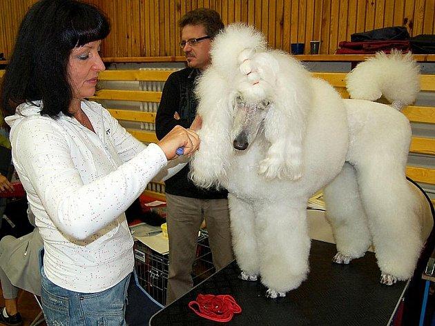 Výstava psů. Ilustrační snímek.