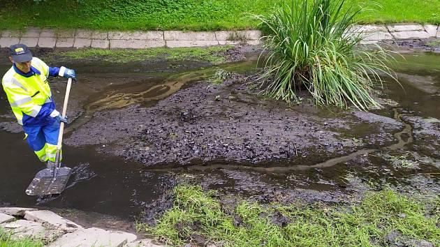 Čištění rybníčků ve Mšeně.