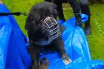Zachráněný pes