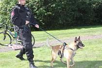 Služební pes MP Turnov. Je zraněný, nepokoušejte se ho chytit!