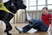 Asistenční pes v akci.