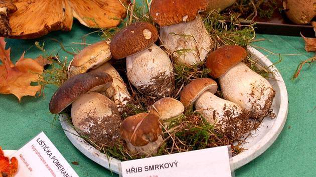 Výstava hub.