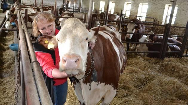 Irena Vodseďálková v kravíně