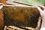 Včely - ilustrační snímek