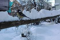 Na Jablonecku aktuálně místy sněhové přeháňky, některé oblasti hlásí polojasno a někde i slunečno.