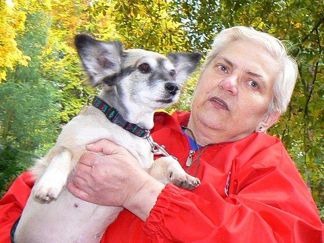 Soutěž Jablonecký voříšek pořádal útulek Dášenka v sobotu v Tyšově parku. Klání se zúčastnilo 36 psů. Vyhrála Magdalena Zaoralová s fenkou Ketty.